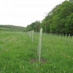 99-Acre Protein CSA: Restoration Agriculture, Multifunctional Hedgerow Planting