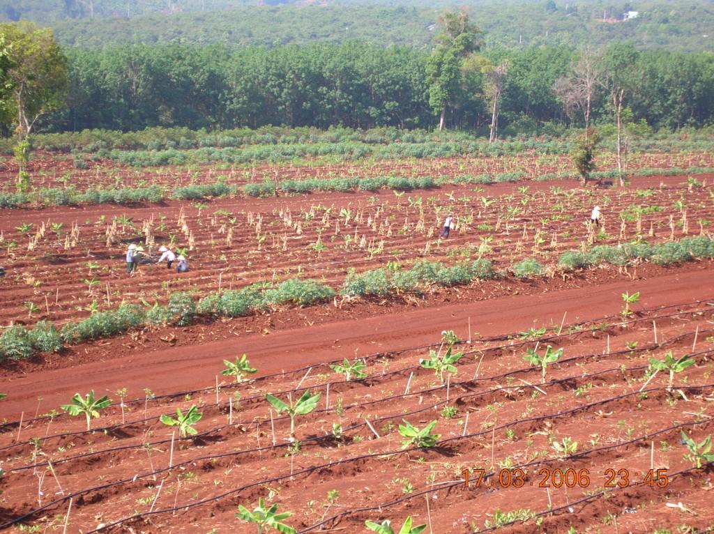Darren Doherty keyline cacao agroforestry in Viet Nam